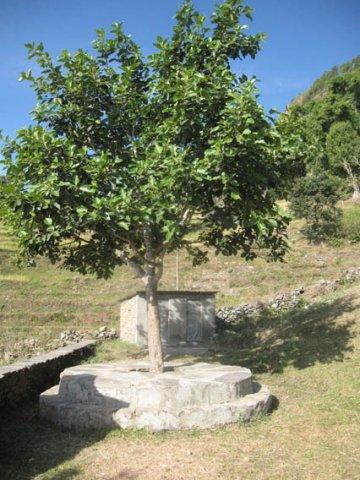 The Resting Spot of Children around Banyan Tree inside the School