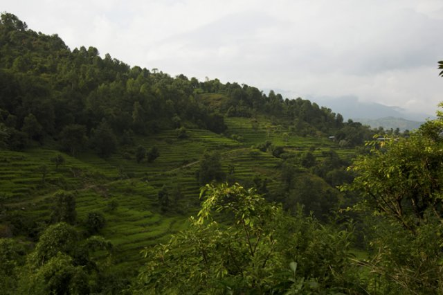 Lush Green Arupokhari Village