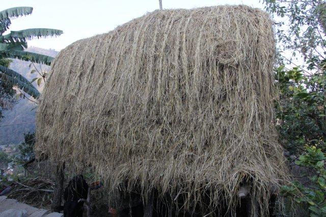 Piled Hay